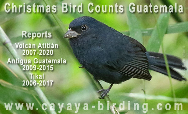 Reports of Christmas Bird Counts in Guatemala