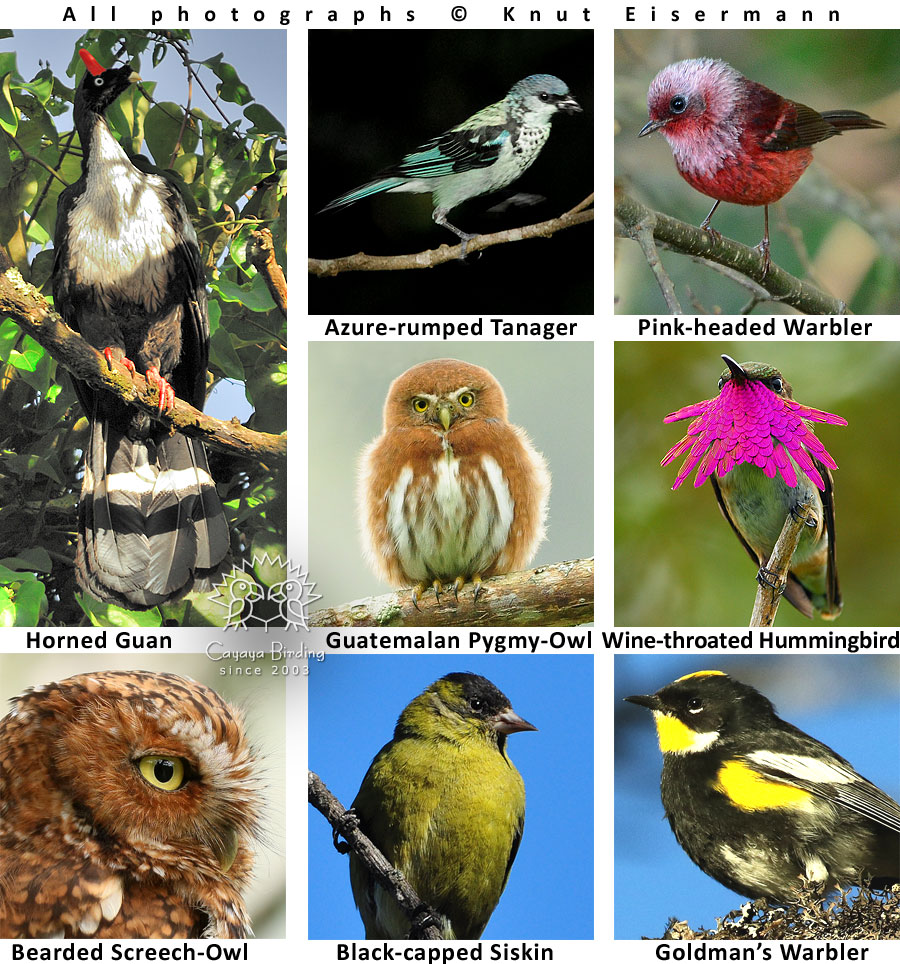 Endemic birds of Guatemala