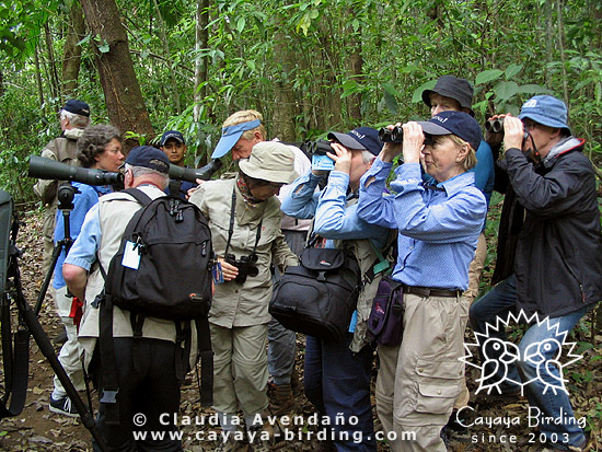 Cayaya Birding group