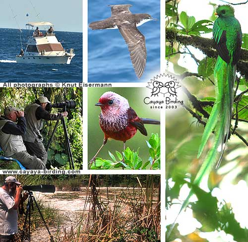 Cayaya Birding customized trips in Guatemala