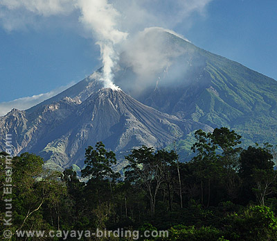 Puffing Santiaguito volcano as seen from Patrocinio Reserve.