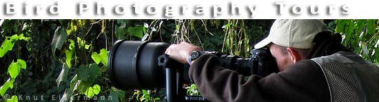 Bird Photography Tours in Guatemala