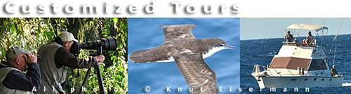 Customized birding and nature tours in Guatemala