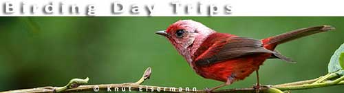 CAYAYA BIRDING Day Tours