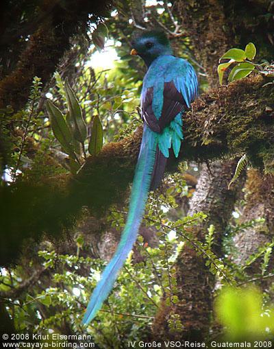 Topic ornithologique ! ♥ Vso2008_phamoc